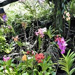 Just a small sample of the beautiful orchids