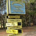 Charleston Tea Plantation - Great place to visit!!