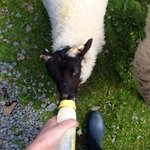 Feeding the lambs was the highlight of our trip, this is a must.