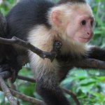 Foto de Guanacaste Adventure & Travel
