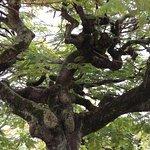 Interesting Trees in Coconut Square