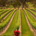 The vineyard that the Hewitson Cellar Door looks out over