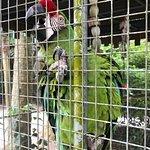 Foto de Flamingo Gardens