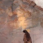 Sloth inside the cavern