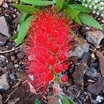 tropical flower in the garden