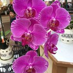 One of the orchids for sale