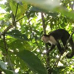 Be careful on the white faced monkeys near food!