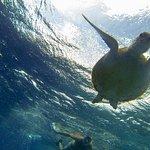 Twee keer een zee schildpad gezien