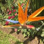 De belles fleurs vous attendent dans ce jardin !