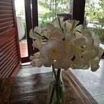 alle paar Tage frische Blumen für uns!