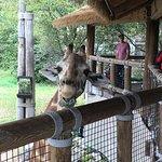 Jacksonville Zoo & Gardens Foto