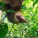 Got to meet a sloth along the path