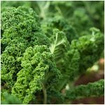 Seasonal vegetable plants