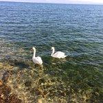 Photo of Poggio al Lago