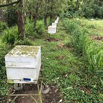 Beehives in the meadow, front window of the farm store, and interior of the bathroom