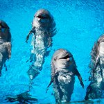 Our famous dolphins