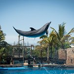 Dolphin Shows