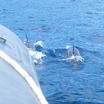Spinner Dolphins on Snorkeling tour