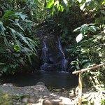 Photo de Tree Houses Hotel Costa Rica