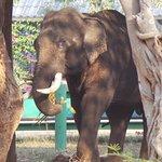 Photo of Taweechai Elephant Camp