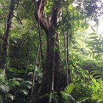 Huge, beautiful trees. The path back down was lined with rubber trees. (not pictured)