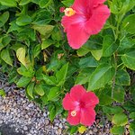 The Westin Cape Coral Resort At Marina Village Foto