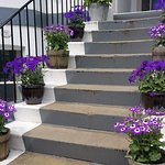Leeway front steps - in bloom