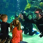 Guests often discover divers swimming right alongside more than two dozen sharks and shark rays.
