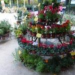 Foto de Real Jardín Botánico