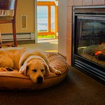 After a long day playing by the sea, Jackson warms by the Fire.