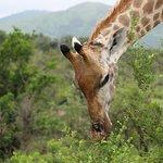 Foto de Ubizane Wildlife Reserve