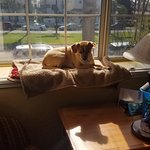 Our dog loved sunning herself in the window! View is of Orange St.