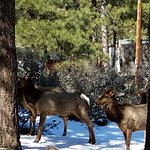 pictures of the Elk in the courtyard