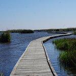 walking through the marsh