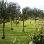 The beautiful gardens with coconuts palms!