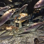 Alaska SeaLife Center Foto
