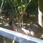 Photo de Zoo Ave