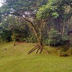 Foto di Plaza Caldas Da Imperatriz Resort & Spa