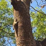 Photo de Tree Of Life