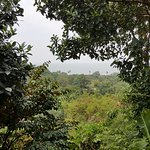 View of lush grounds and ocean