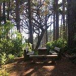ZEALANDIA Sanctuary Foto