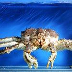Alaskan King Crab, the king of Alaskan seafood.
