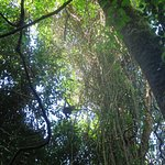 Photo de Carara National Park