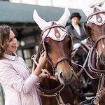 Kronenhof Horse Carriage 3