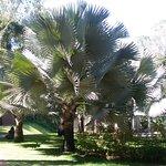 Uma das várias espécies de palmeiras
