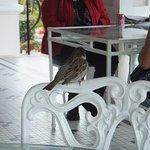 Photo de Rosedon Hotel