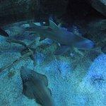 Photo of Istanbul Aquarium