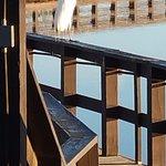 Dock to cross the lake