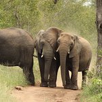 If you love elephant and can watch them for hours Kapama is perfect