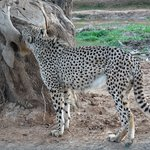 Photo of Attica Zoological Park